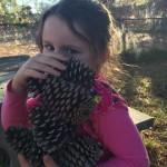 pic pinecones